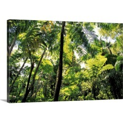 Large Solid-Faced Canvas Print Wall Art Print 30 x 20 entitled Puerto Rico, El Junque Rainforest National Park