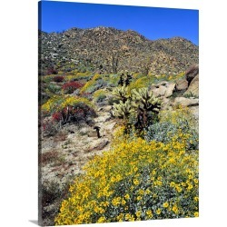 Large Solid-Faced Canvas Print Wall Art Print 24 x 30 entitled Golden brittlebrush grows in the arid soil of Anza-Borrego ...