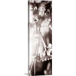 Large Solid-Faced Canvas Print Wall Art Print 16 x 48 entitled Blossom Triptych III