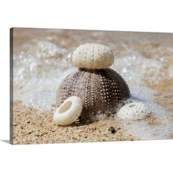 Large Solid-Faced Canvas Print Wall Art Print 30 x 20 entitled Urchin shells on a beach, St. Croix, Virgin Islands, United...