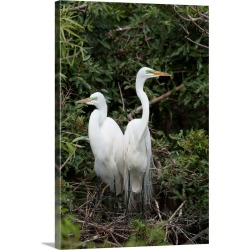 Large Gallery-Wrapped Canvas Wall Art Print 16 x 24 entitled Great Egret pair in nest in breeding plumage, Florida