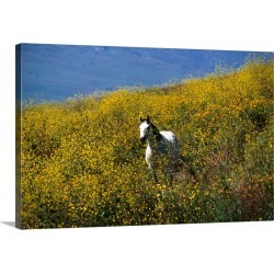 Large Gallery-Wrapped Canvas Wall Art Print 24 x 16 entitled A horse running wild in a sea of yellow flowers