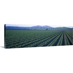 Large Gallery-Wrapped Canvas Wall Art Print 36 x 12 entitled Crops in a field, California