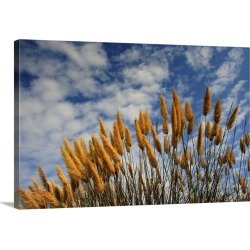 Large Solid-Faced Canvas Print Wall Art Print 30 x 20 entitled Wheat in field against sky