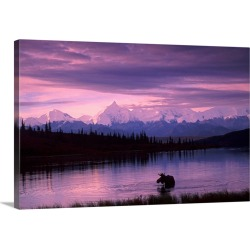 Large Gallery-Wrapped Canvas Wall Art Print 30 x 20 entitled Alaska Range Moose Bull Wonder Lake Denali Natl Park Interior...