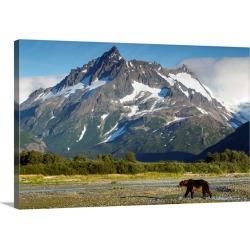 Large Gallery-Wrapped Canvas Wall Art Print 30 x 20 entitled Brown Bear, Katmai National Park, Alaska