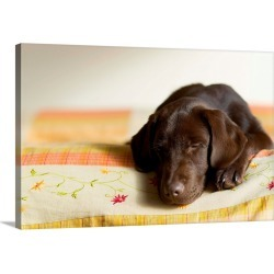Large Gallery-Wrapped Canvas Wall Art Print 24 x 16 entitled Chocolate Lab Puppy On Bed found on Bargain Bro India from Great Big Canvas - Dynamic for $214.99