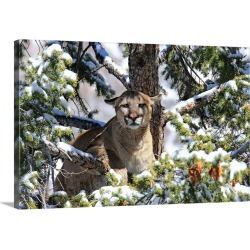 Large Solid-Faced Canvas Print Wall Art Print 30 x 20 entitled A mountain lion crouching in a snow-covered tree
