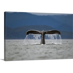 Large Gallery-Wrapped Canvas Wall Art Print 24 x 16 entitled Humpback Whale raises its tail while diving in Frederick Soun... found on Bargain Bro India from Great Big Canvas - Dynamic for $169.99