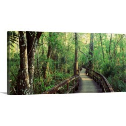 Large Gallery-Wrapped Canvas Wall Art Print 30 x 14 entitled Florida, Fakahatchee Strand State Preserve, Boardwalk at Big ... found on Bargain Bro India from Great Big Canvas - Dynamic for $179.99