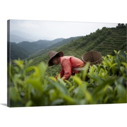 Large Gallery-Wrapped Canvas Wall Art Print 24 x 16 entitled Picking tea leaves on a Puer tea estate in the Yunnan Province found on Bargain Bro India from Great Big Canvas - Dynamic for $224.99