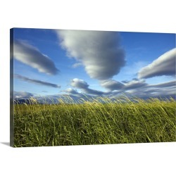 Large Gallery-Wrapped Canvas Wall Art Print 30 x 20 entitled Coastal Meadow At Hallo Bay In Katmai National Park