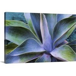 Large Solid-Faced Canvas Print Wall Art Print 30 x 20 entitled Century Plant