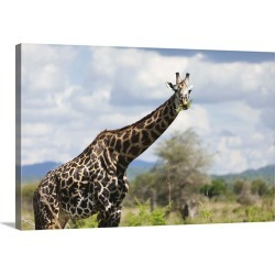 Large Solid-Faced Canvas Print Wall Art Print 30 x 20 entitled A giraffe in Tanzania, Africa.