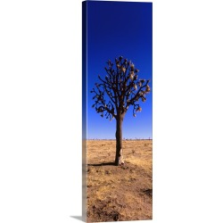 Large Gallery-Wrapped Canvas Wall Art Print 12 x 36 entitled Joshua tree (Yucca brevifolia) in a field, California
