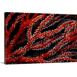 Large Gallery-Wrapped Canvas Wall Art Print 15 x 48 entitled Close up of Gorgonian fan