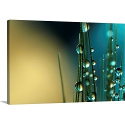 Large Solid-Faced Canvas Print Wall Art Print 30 x 20 entitled Grass Seed with Blue