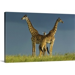Large Solid-Faced Canvas Print Wall Art Print 30 x 20 entitled Between The Two Litigants Has The Third