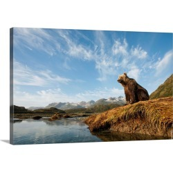 Large Gallery-Wrapped Canvas Wall Art Print 30 x 20 entitled Brown Bear And Mountains, Katmai National Park, Alaska