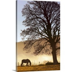 Large Gallery-Wrapped Canvas Wall Art Print 20 x 30 entitled A Horse Grazing In A Field, Northumberland, England
