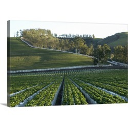 Large Gallery-Wrapped Canvas Wall Art Print 24 x 15 entitled Organic Strawberry farm. found on Bargain Bro India from Great Big Canvas - Dynamic for $199.99