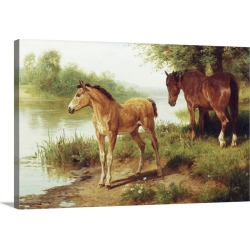 Large Solid-Faced Canvas Print Wall Art Print 30 x 20 entitled A Mare And Her Foal By Basil Bradley