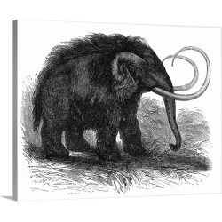 Large Solid-Faced Canvas Print Wall Art Print 30 x 24 entitled Woolly mammoth, 19th century artwork