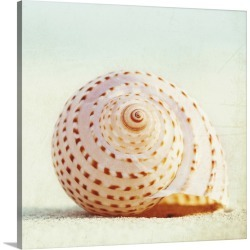 Large Gallery-Wrapped Canvas Wall Art Print 16 x 16 entitled Seashell Voices