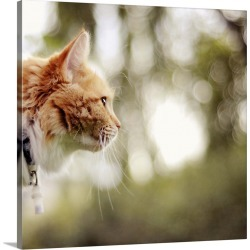 Large Solid-Faced Canvas Print Wall Art Print 20 x 20 entitled A beautiful and cute cat with red fur and a bokeh background.