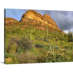 Large Gallery-Wrapped Canvas Wall Art Print 24 x 18 entitled Organ Pipe Cactus, Organ Pipe Cactus National Monument, Sonor... found on Bargain Bro India from Great Big Canvas - Dynamic for $234.99