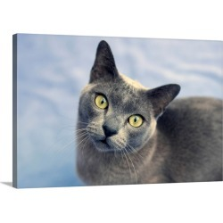 Large Gallery-Wrapped Canvas Wall Art Print 30 x 20 entitled Burmese cat looking to camera