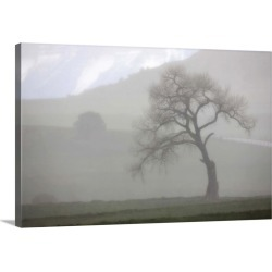 Large Solid-Faced Canvas Print Wall Art Print 30 x 20 entitled A single tree on a foggy day