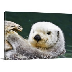 Large Gallery-Wrapped Canvas Wall Art Print 30 x 20 entitled Portrait of a cute, furry sea otter looking at the camera