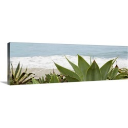 Large Gallery-Wrapped Canvas Wall Art Print 30 x 10 entitled Succulent Waters found on Bargain Bro India from Great Big Canvas - Dynamic for $134.99