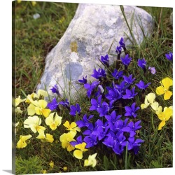 Large Solid-Faced Canvas Print Wall Art Print 20 x 20 entitled Italy, Pansy and Gentianella flowers