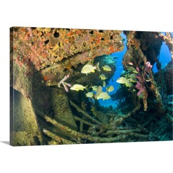 Large Solid-Faced Canvas Print Wall Art Print 30 x 20 entitled Schooling snappers, Wreck of the RMS Rhone, iron-hulled ste...