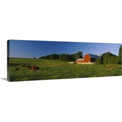 Large Gallery-Wrapped Canvas Wall Art Print 36 x 12 entitled Herd of cows grazing in a field, Kent County, Michigan