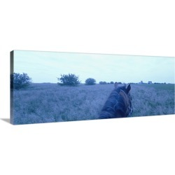 Large Gallery-Wrapped Canvas Wall Art Print 48 x 19 entitled Horse in a field, Illinois