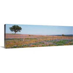 Large Gallery-Wrapped Canvas Wall Art Print 30 x 10 entitled Texas Bluebonnets and Indian Paintbrushes in a field, Texas H...