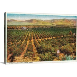 Large Solid-Faced Canvas Print Wall Art Print 30 x 20 entitled A Beautiful Orange Grove, California State