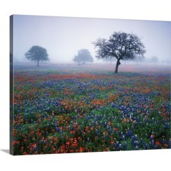 Large Gallery-Wrapped Canvas Wall Art Print 20 x 16 entitled Texas, Hill Country, View of Texas paintbrush and bluebonnets...