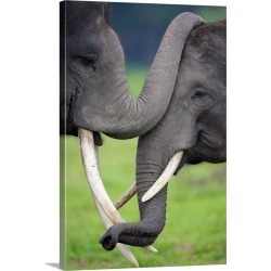 Large Gallery-Wrapped Canvas Wall Art Print 20 x 30 entitled Elephas maximus / Asiatic Elephant found on Bargain Bro Philippines from Great Big Canvas - Dynamic for $209.99