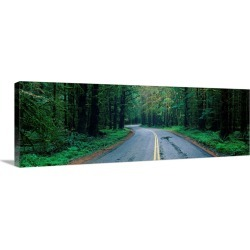 Large Solid-Faced Canvas Print Wall Art Print 48 x 16 entitled Road Hoh Rain Forest WA