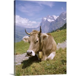 Large Solid-Faced Canvas Print Wall Art Print 18 x 24 entitled Cow at Alpiglen, Grindelwald, Bernese Oberland, Swiss Alps,...