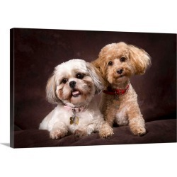 Large Solid-Faced Canvas Print Wall Art Print 30 x 20 entitled A Shihtzu And A Poodle On A Brown Backdrop