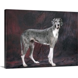 Large Gallery-Wrapped Canvas Wall Art Print 24 x 18 entitled Great Dane Dog