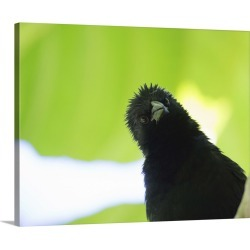 Large Gallery-Wrapped Canvas Wall Art Print 24 x 19 entitled A crow stares at the camera with great curiosity