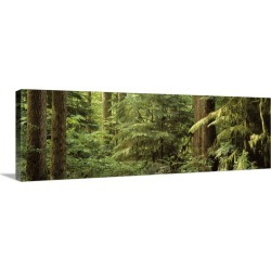 Large Solid-Faced Canvas Print Wall Art Print 48 x 16 entitled Washington, Rockport, Rockport State Park, Trees in a forest found on Bargain Bro India from Great Big Canvas - Dynamic for $209.99
