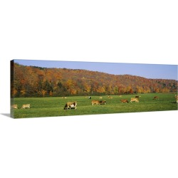 Large Gallery-Wrapped Canvas Wall Art Print 36 x 12 entitled Herd of cows grazing in a field, Wilmington, Windham County, ...