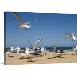 Large Solid-Faced Canvas Print Wall Art Print 30 x 20 entitled Seagulls on ocean beach